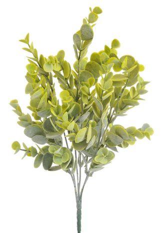 Eukalyptus (Poškodené )